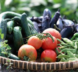 登米市産の新鮮野菜